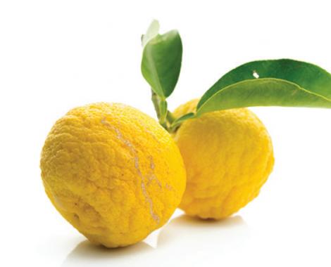 Yuzu (Japanese Citrus)